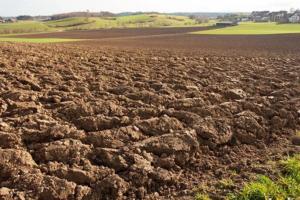 Сдать в аренду землю сельскохозяйственного назначения