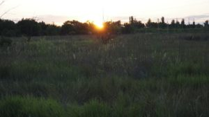 Сдам земельный участок в аренду сельхозназначения